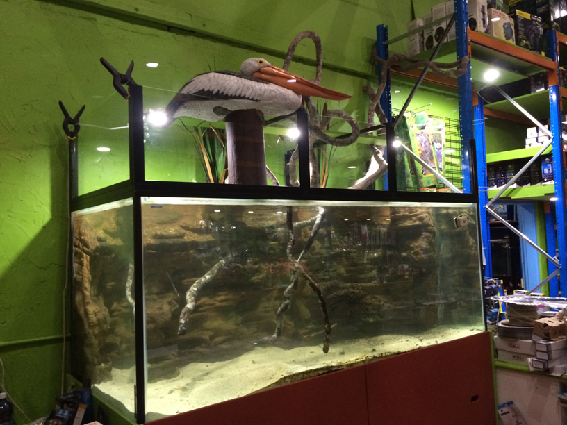 Aquarium Store Related Keywords & Suggestions - Aquarium Store Long ...