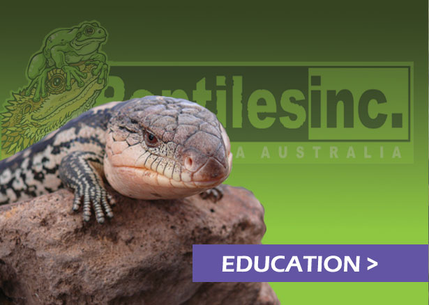 Reptiles Inc & Canberra Reptile Zoo