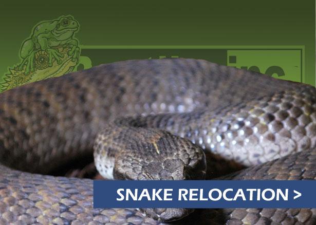 Reptiles Inc & Canberra Reptile Zoo